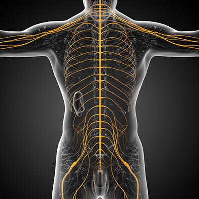 The Pillars of Chiropractic BioPhysics Explained: Idaho Chiropractor